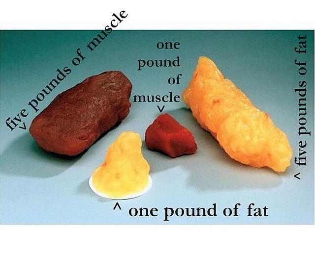 Fat_2